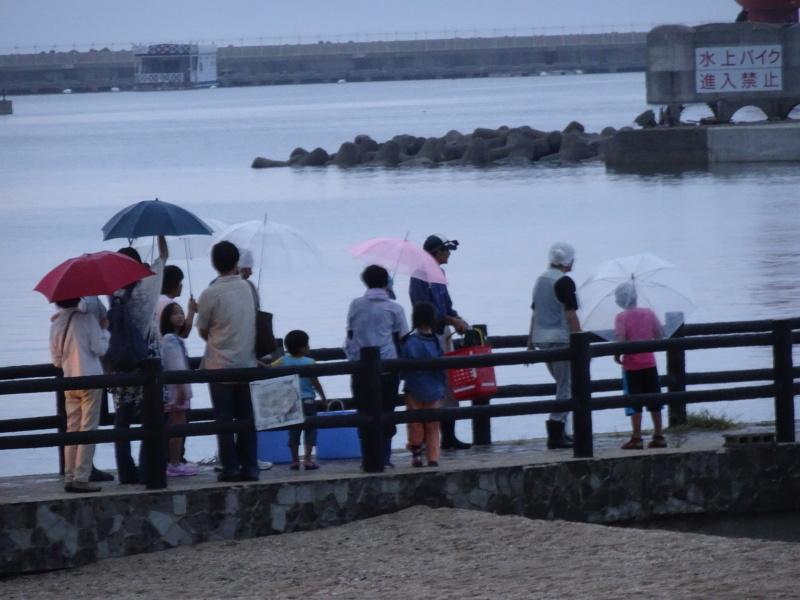 ウミホタル観察会リハーサル・・・せんなん里海公園海岸_c0108460_22311612.jpg