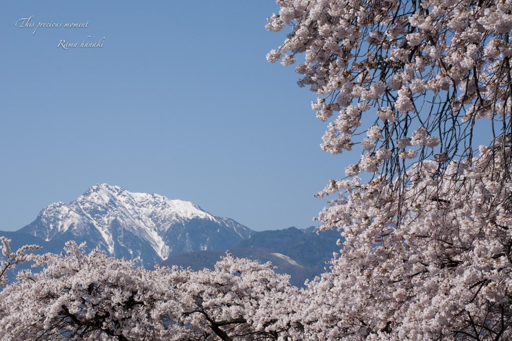 4月長い冬が終わって春うらら_c0137403_14385676.jpg