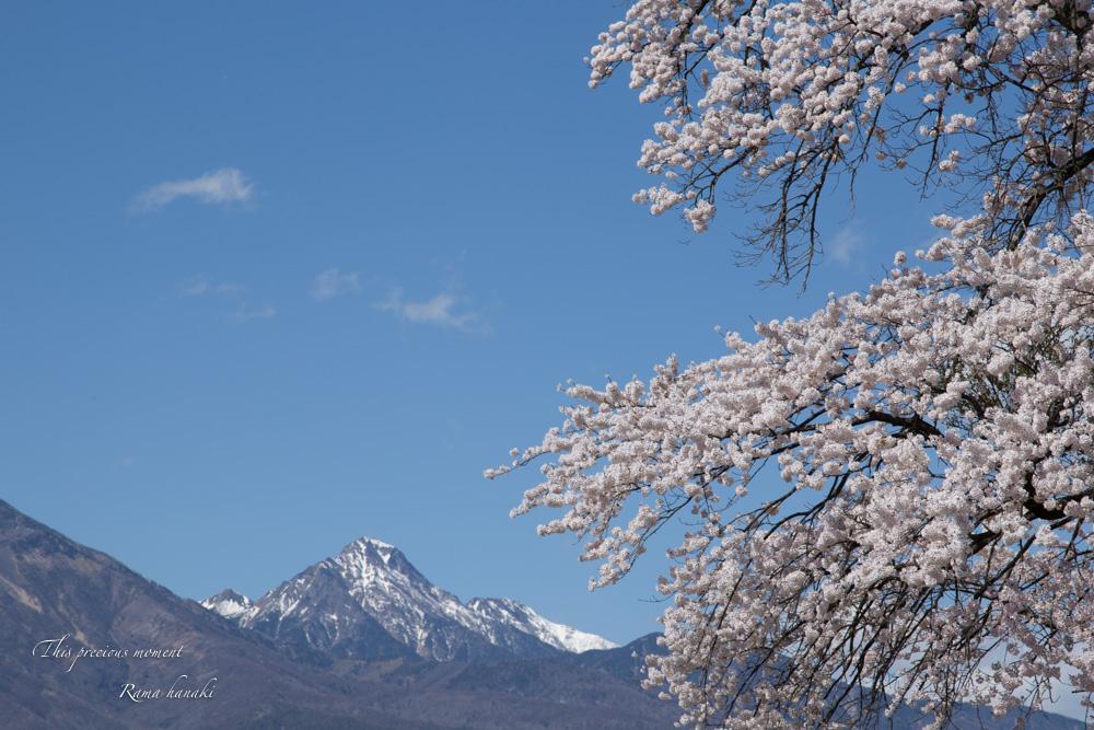 4月長い冬が終わって春うらら_c0137403_1439650.jpg