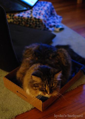 箱に入ってみたBailey_b0253205_01321010.jpg