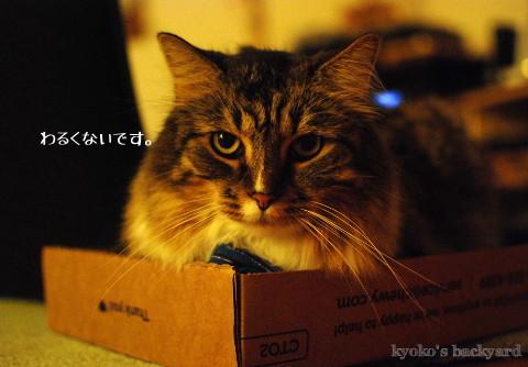 箱に入ってみたBailey_b0253205_01413230.jpg