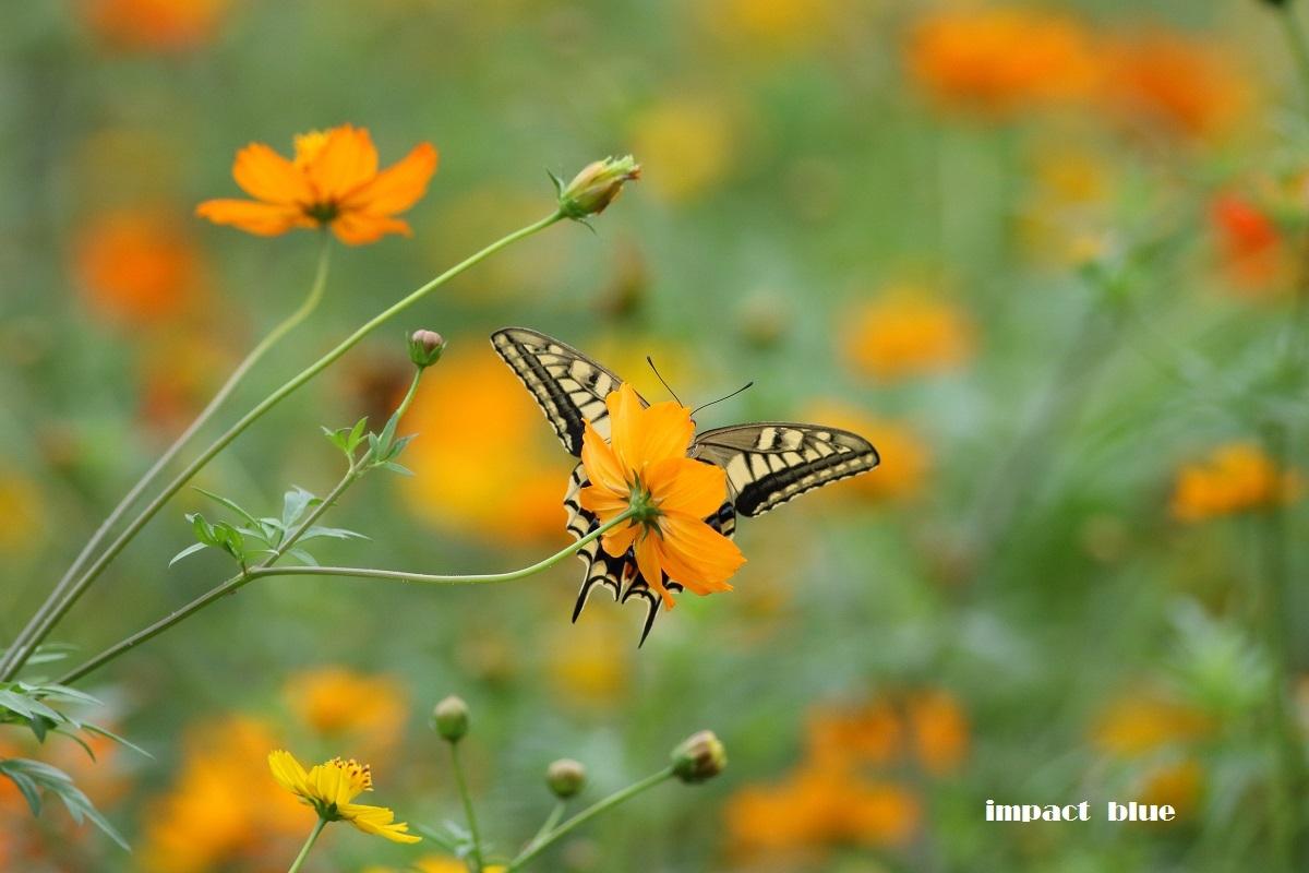 夏から秋へ、彩り花壇(#^.^#)_a0355908_18551315.jpg