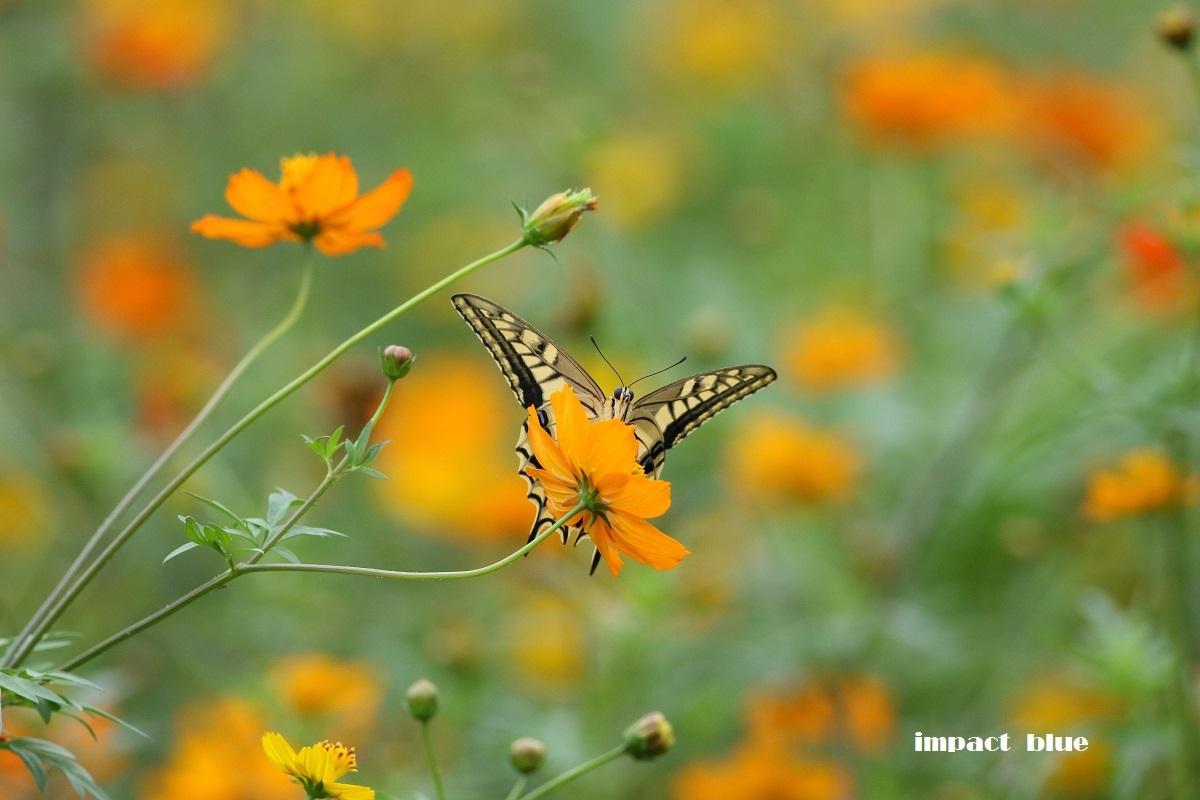 夏から秋へ、彩り花壇(#^.^#)_a0355908_18553117.jpg