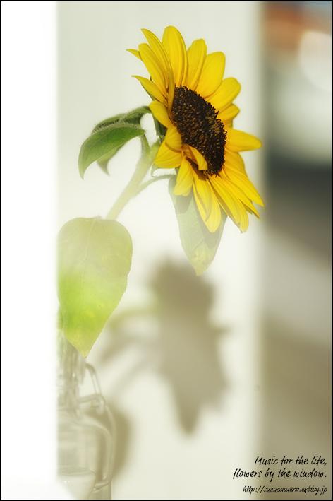 人生に音楽を、窓辺に花を_f0100215_00084425.jpg