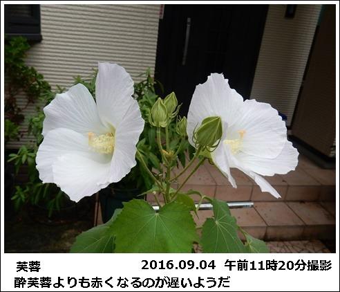 e0033229_17312931.jpg