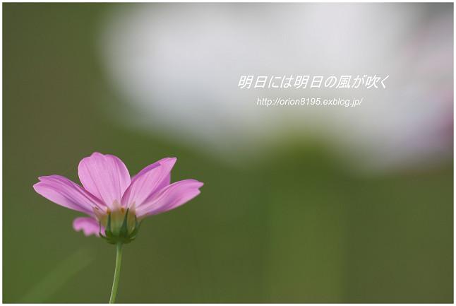 f0361079_8531832.jpg