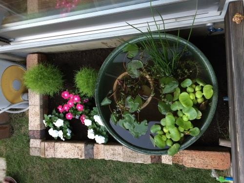 花壇をビオトープに!?_d0185998_16435766.jpeg