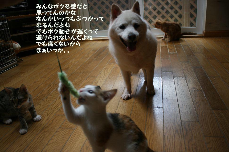 トトちゃん&りおちゃん_f0242002_22042253.jpg