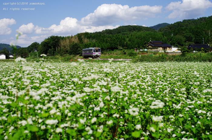 蕎麦の花が広がる_d0309612_00025744.jpg