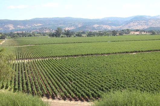 Far Niente  カリフォルニアワイン合宿④_c0141025_20342880.jpg