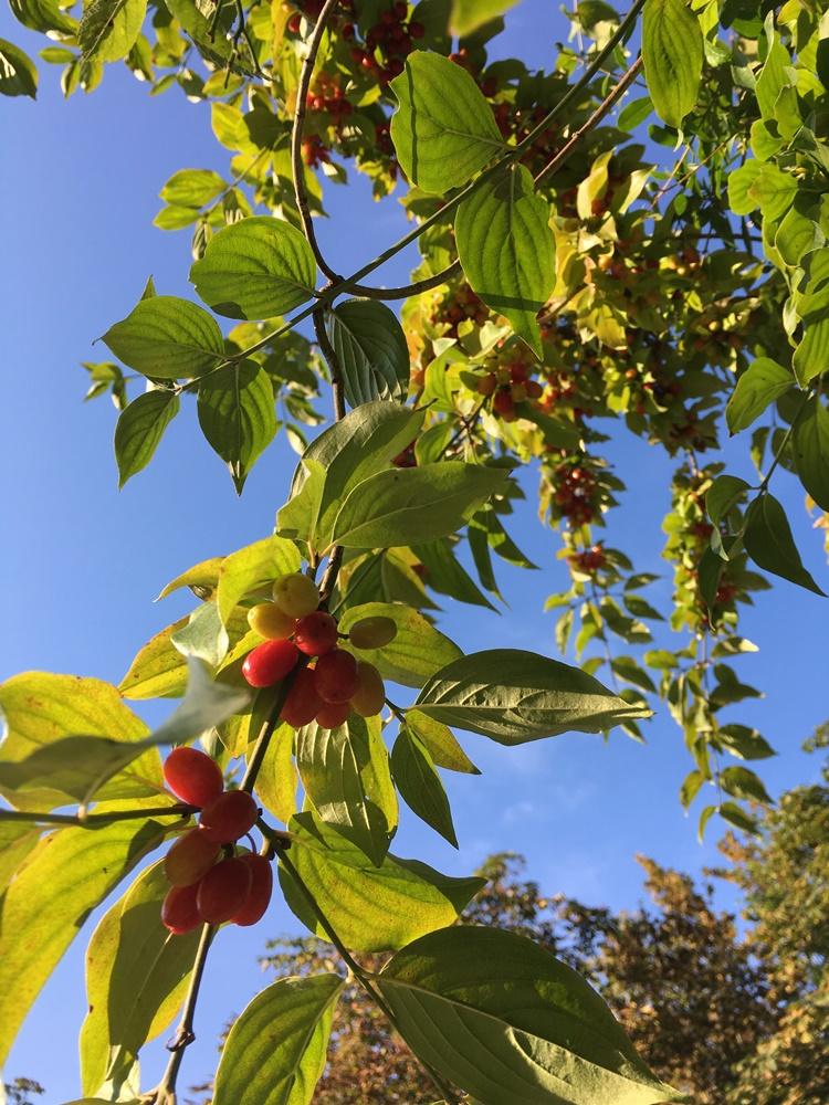 Langsam kommt der Herbst._e0116763_019322.jpg