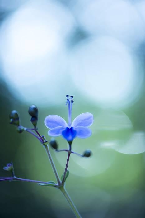 青い蝶_e0271864_20252890.jpg