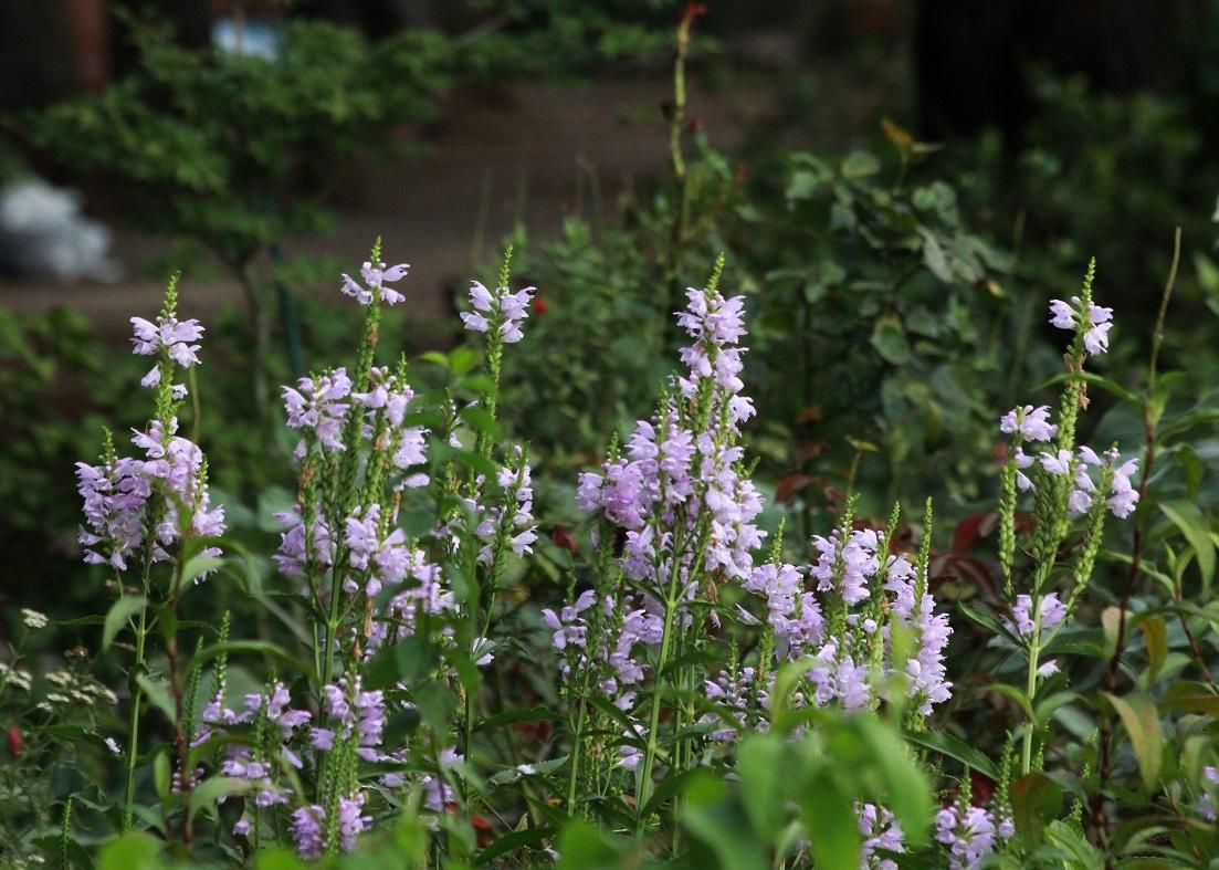 二人のライフワークに ~福岡中央公園~_a0107574_15471144.jpg