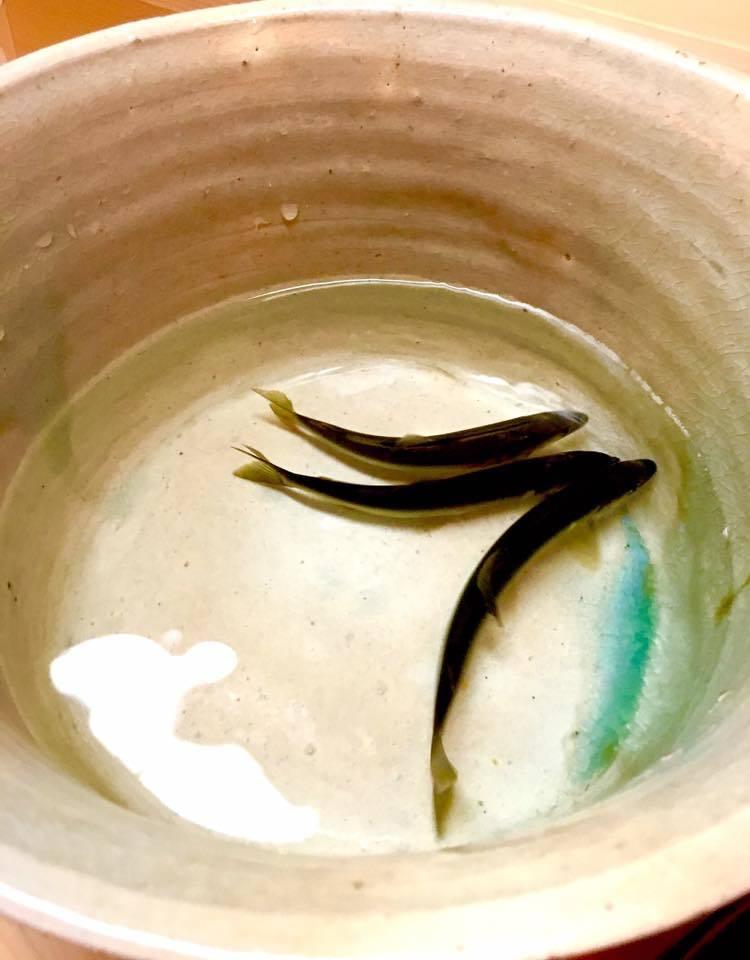 ミシュラン三つ星☆日本料理「松川」に美味礼賛🎵_a0138976_16062669.jpg