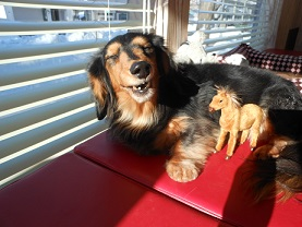 笑う犬たち。。。_b0186183_1629166.jpg