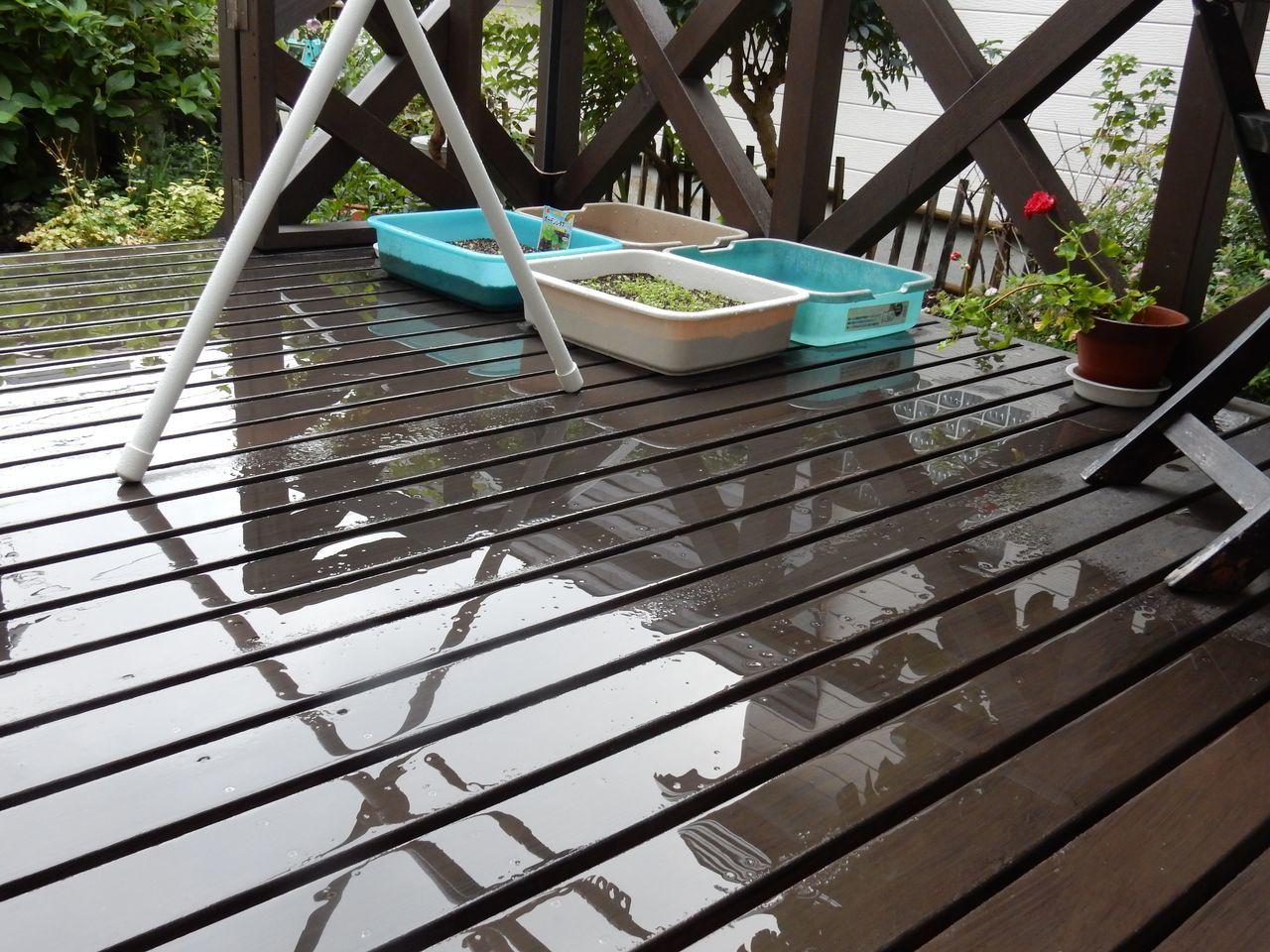 雨でしたが、穏やかな雨でとても50年に一度というようなものではありません_c0025115_22245962.jpg