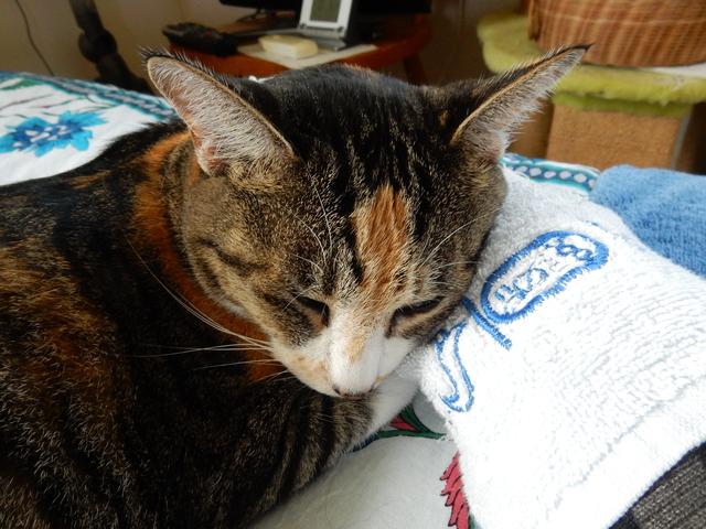 '16,9,6(火)快適猫的生活!_f0060461_8255156.jpg