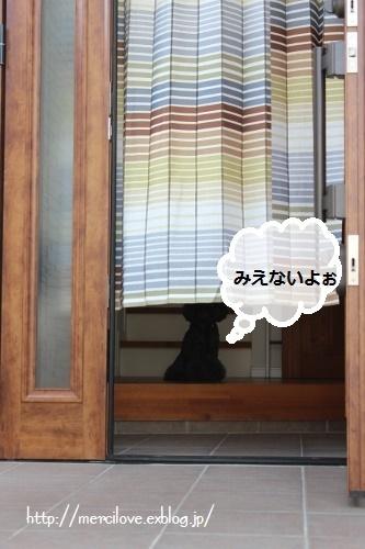 b0209643_20113764.jpg