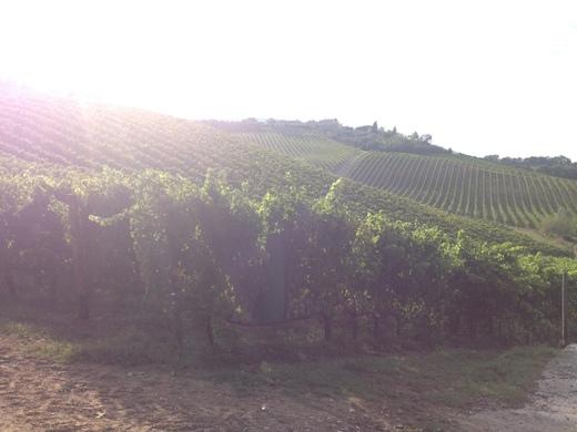 ブドウの収穫始まったのねぇ_a0136671_0573311.jpg