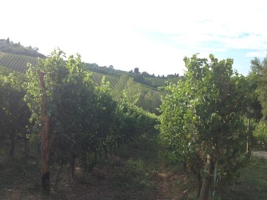 ブドウの収穫始まったのねぇ_a0136671_110670.jpg