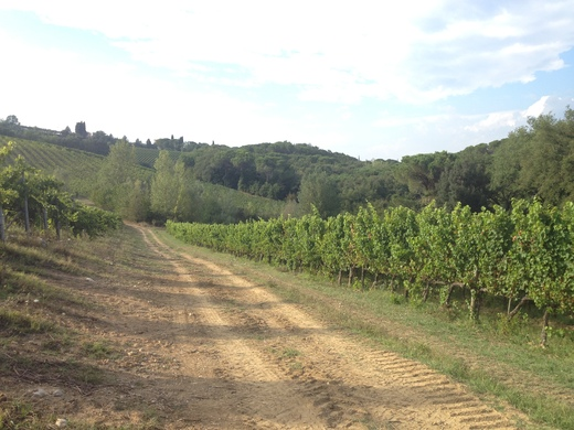 ブドウの収穫始まったのねぇ_a0136671_143589.jpg