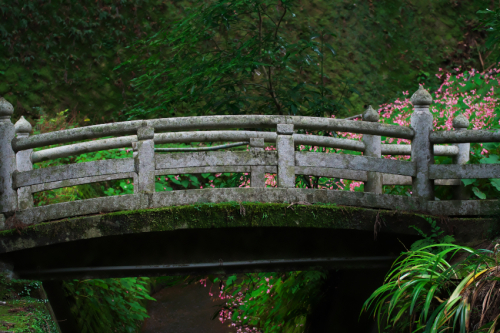 出流山(いずるさん)満願寺の秋海棠(シュウカイドウ)2_a0263109_09585725.jpg