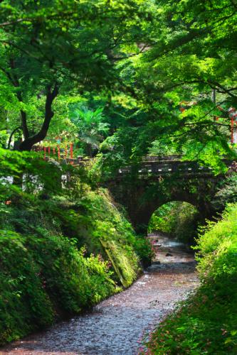 出流山(いずるさん)満願寺の秋海棠(シュウカイドウ)2_a0263109_10004201.jpg