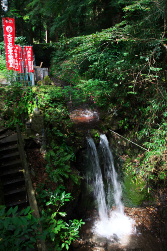 出流山(いずるさん)満願寺の秋海棠(シュウカイドウ)2_a0263109_10004346.jpg