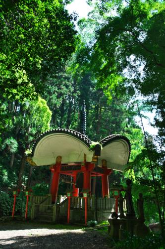 出流山(いずるさん)満願寺の秋海棠(シュウカイドウ)3_a0263109_10070766.jpg