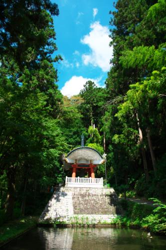 出流山(いずるさん)満願寺の秋海棠(シュウカイドウ)3_a0263109_10070774.jpg