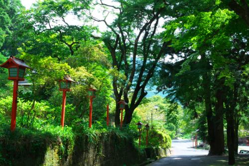 出流山(いずるさん)満願寺の秋海棠(シュウカイドウ)3_a0263109_10082555.jpg
