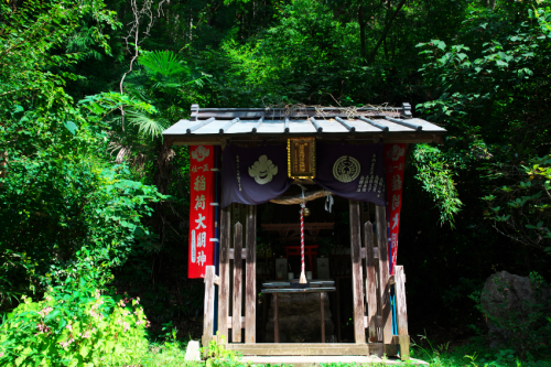 出流山(いずるさん)満願寺の秋海棠(シュウカイドウ)3_a0263109_10082667.jpg
