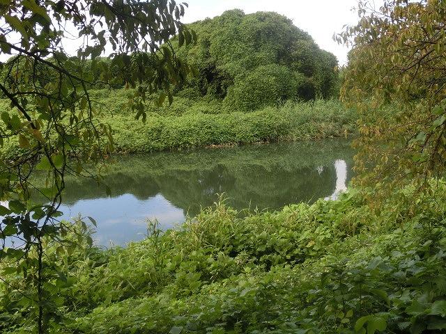 「ヒガンバナウォーク」に向けた草刈り  滝川に続き、沼川のサクラ並木区間も開通!_f0141310_719133.jpg