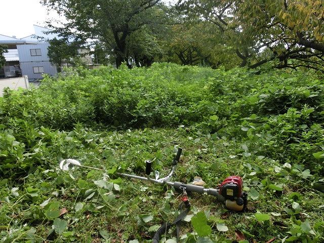 「ヒガンバナウォーク」に向けた草刈り  滝川に続き、沼川のサクラ並木区間も開通!_f0141310_7204786.jpg