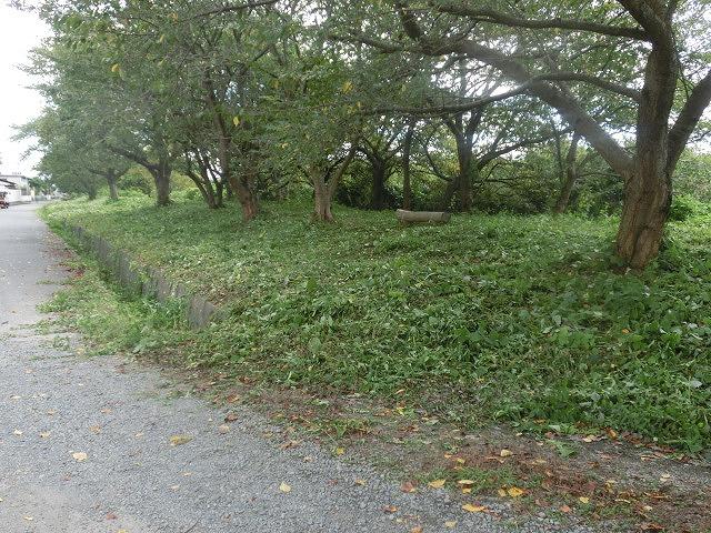 「ヒガンバナウォーク」に向けた草刈り  滝川に続き、沼川のサクラ並木区間も開通!_f0141310_722959.jpg