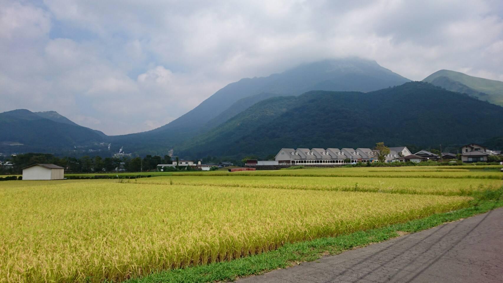 稲刈り_c0357333_14324346.jpg