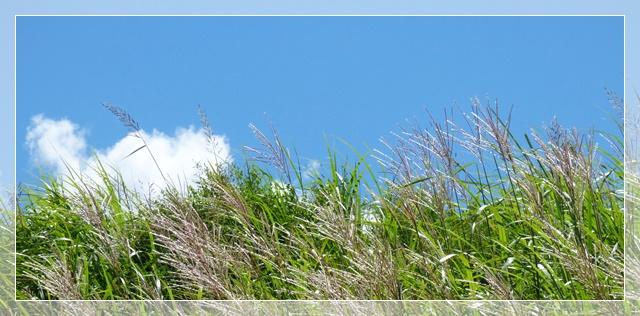 f0224350_2011290.jpg