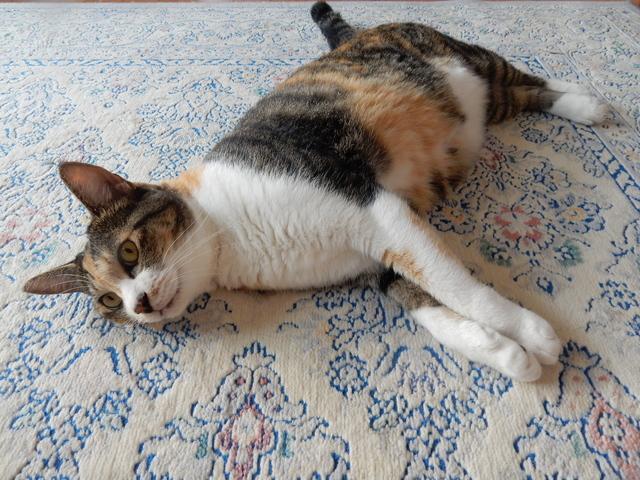 '16,9,8(木)猫の危機管理能力!_f0060461_8454546.jpg