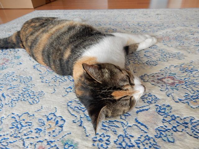 '16,9,8(木)猫の危機管理能力!_f0060461_8462370.jpg