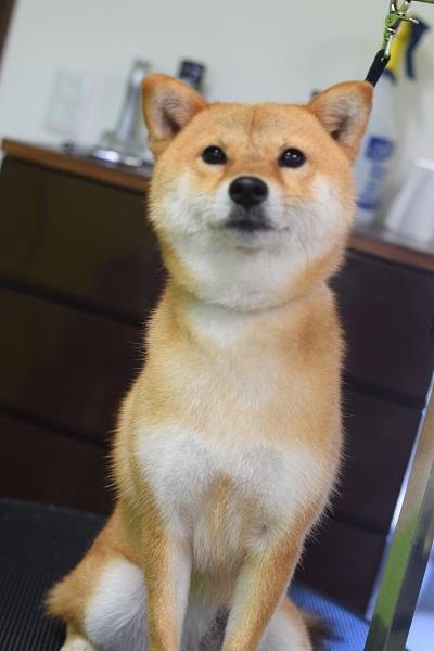 マロンちゃんからのご紹介!!_b0347262_15482905.jpg