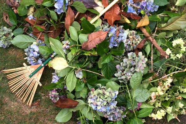 9月初旬の庭仕事_d0129786_16503541.jpg