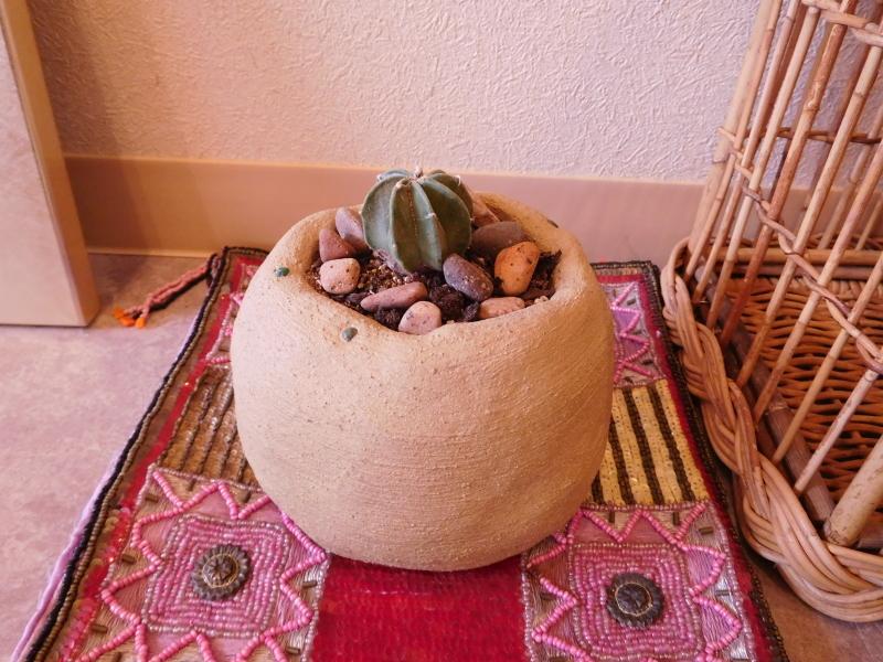秋冬野菜の「種撒き」_a0125419_07141853.jpg