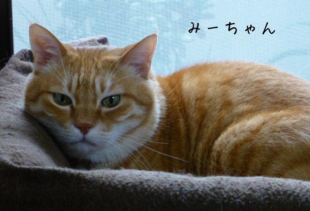 お留守番にゃんこギャラリー【August-2】_e0237625_17155424.jpg