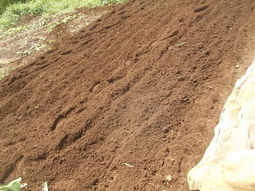 大根の植え付けの、お手伝い.._b0137932_1575618.jpg