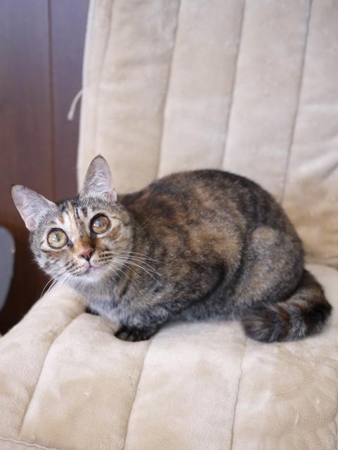 猫のお留守番 ワサビちゃん天ちゃん麦くん茶くん編。_a0143140_2217034.jpg