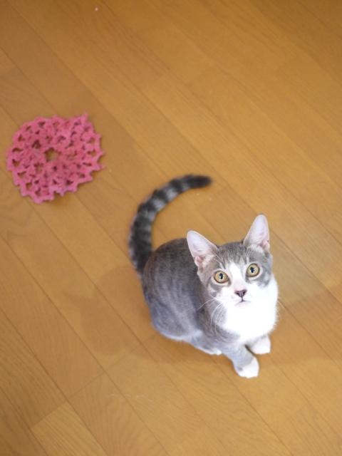 猫のお留守番 ワサビちゃん天ちゃん麦くん茶くん編。_a0143140_22172360.jpg
