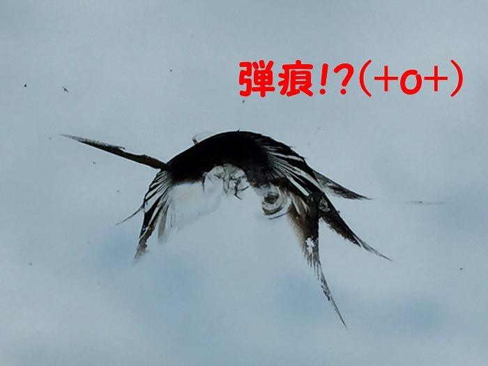 b0168041_17341415.jpg