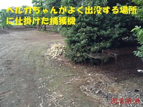 f0121712_16315777.jpg