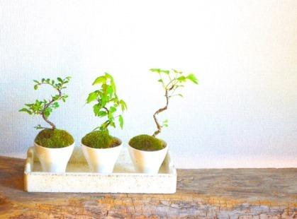 多肉植物ワークショップと9月の豆盆栽ワークショップ_d0263815_18013573.jpg