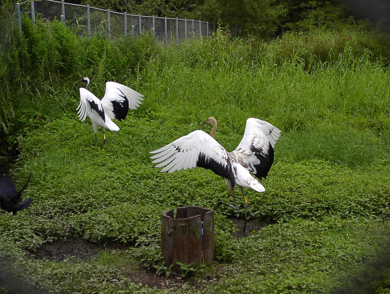 湿原は自然のダムだった 9月10日_f0113639_18202373.jpg